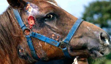 At Vebası