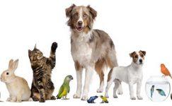 Ev ve Süs Hayvanlarının Üretim, Satış, Barınma ve Eğitim Yerleri Hakkında Yönetmelik ile ilgili Genelge