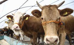 Hayvan Hastalıkları İle Mücadele ve Hayvan Hareketleri Kontrolü Genelgesi (2019)