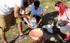 Adana'da Hayvansever Dayanışması