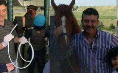 Veteriner, Muayene Ettiği Atın Çiftesiyle Öldü