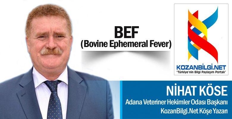 BEF (Bovine Ephemeral Fever)
